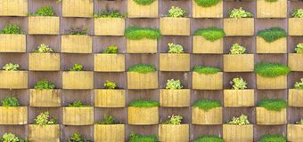 vertical garden planted with succulents An urban living green wall Royalty Free Stock Image