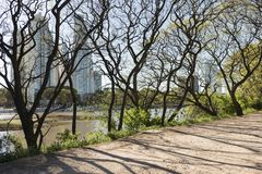 Urban nature, Puerto Madero buildings from the Costanera Sur ecological reserve