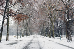 Urban park alley flanked by old trees in winter Stock Photography
