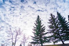 Trees in urban park with cloudy sky as background royalty free stock photos