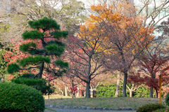 Urban park in Tokyo, Japan. Autumn trees at the Urban park in Tokyo, Japan Royalty Free Stock Image