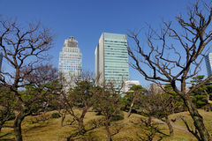 Urban park in Tokyo, Japan Stock Photography