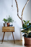 Urban plants in modern apartment sunny daylight individual design elements Royalty Free Stock Image