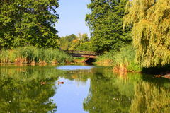 Urban Pond. A quiet urban duck pond in a city park royalty free stock photography