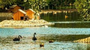 Urban pond Stock Image