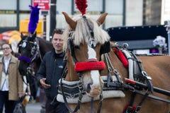 Urban Ponies Royalty Free Stock Image