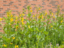 Urban Prairie Stock Photos