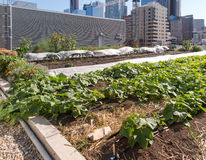Urban Rooftop Farm Royalty Free Stock Images