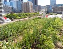Urban Rooftop Farm Stock Image