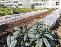 Urban Rooftop Farm Royalty Free Stock Photo