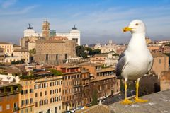 Urban seagull against the panorama of Rome Stock Image