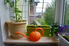 Urban small garden on the balcony. Plants in pots and containers and bright orange watering can. On wooden windowsill stock images