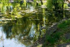 Urban small lake coast at summer sunny day Stock Images