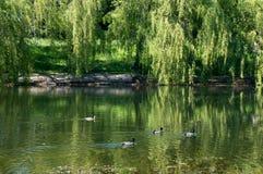 Urban small lake in Minsk at summer sunny day Stock Photos