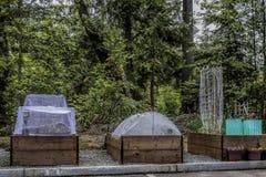 Urban som arbeta i trädgården den lyftta sängar och växten Protectorsn arkivfoto