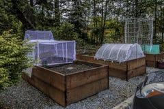 Urban som arbeta i trädgården den lyftta sängar och växten Protectorsn royaltyfria foton