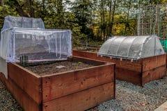 Urban som arbeta i trädgården lyftta sängar och växtskärmbeskyddanden royaltyfria bilder