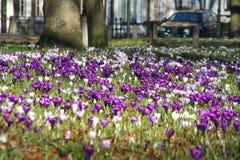 Urban Spring Stock Photography