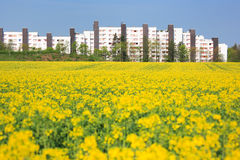 Urban spring. Rape field and cityscape Royalty Free Stock Image
