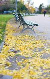 Urban street with fallen leaves on the ground Royalty Free Stock Image