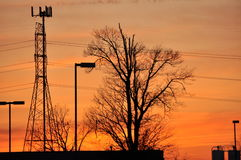 Urban sunset. Cellphone Tower and a winter tree during sunset Royalty Free Stock Photography