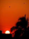 Urban Sunset Royalty Free Stock Images