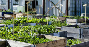 Urban trädgård och lantbruk i spingtime royaltyfria foton