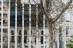 Urban tree against modern office building in downtown district o. Madrid, Spain - April 7, 2018:  Urban tree against modern office building in downtown district Stock Image