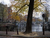 Urban tree in autumn along the canal in Amsterdam city royalty free stock photos