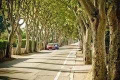 Urban tree line street in Zadar Stock Photo