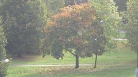Urban tree sunny day autumn 4K. Riga Latvia autumn Urban tree sunny day stock video