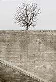Urban tree during the winter. An urban tree in winter waiting for spring Royalty Free Stock Photo