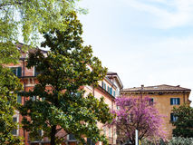 Urban trees in Verona city in spring Royalty Free Stock Photography