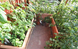 Urban vegetable garden in a terrace Royalty Free Stock Images
