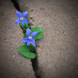 Urban Violets Stock Images
