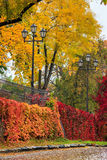 Urban wet landscape with street lights and yellow autumn trees Stock Images