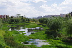 Urban wetland of apartment community. Urban wetland city park Leisure place Royalty Free Stock Photo