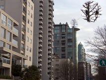 Urban wildlife bald eagles Stock Photo