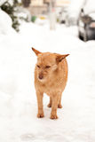Urban winter scene with dog in the snow Royalty Free Stock Image