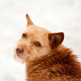 Urban winter scene with dog in the snow Royalty Free Stock Photos