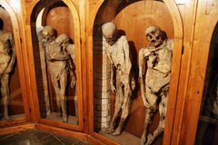 Urbania mummies Royalty Free Stock Photo