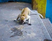 Urbanism trifft wild lebende Tiere Lizenzfreie Stockbilder