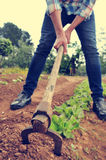 Urbanite man digging in a garden Royalty Free Stock Photos