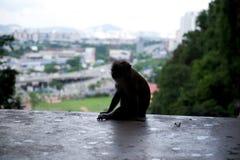 Urbano y fauna Foto de archivo