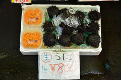 Urchin eggs packed for sale at Hakodate morning fish Market plac Royalty Free Stock Photography