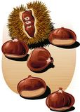Urchin open chestnuts, with scattered chestnuts. Urchin open chestnuts, with some scattered chestnuts Stock Images