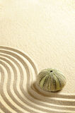 Urchin in sand. With line royalty free stock photo