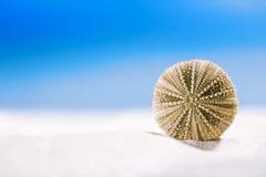 Urchin shell starfish with ocean, on  sand beach Stock Photography