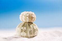 Urchin shell starfish with ocean, on sand beach Royalty Free Stock Image