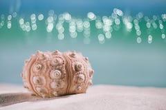 Urchin shell starfish with ocean, on white sand beach Stock Photo